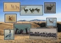 Geese, Elk, Grouse, Pheasant, Deer and Antelop